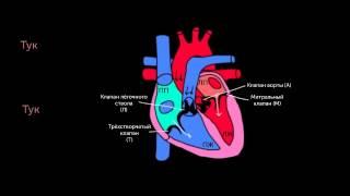 KhanAcademyRussian Тоны сердца