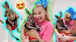 Video HANGIN OUT WITH A BABY KANGAROO!!! **cuteness overload!!** MP3, 3GP, MP4, WEBM, AVI, FLV Desember 2018