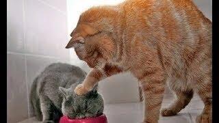 Video 10 Menit Video Tingkah Lucu Kucing Bikin Ketawa Ngakak MP3, 3GP, MP4, WEBM, AVI, FLV Mei 2019