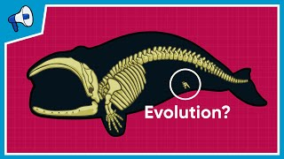 What is the Evidence for Evolution? (Stated Clearly)