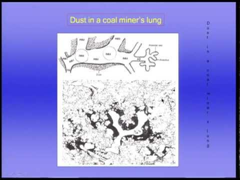 ventilation - Lectures in Respiratory Physiology, John B West MD, PhD.