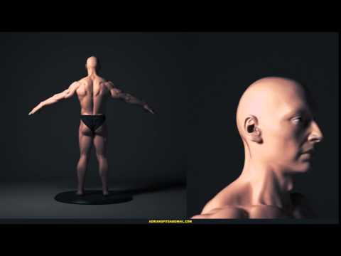 3D Male Figure 3D model - Male Figure Turntable Animation