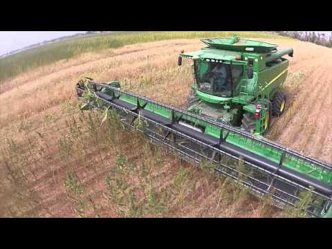 Colorado Hemp Harvest 2015- Silz Harvesting