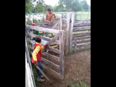 Montaria vacaiada em itacaja-to