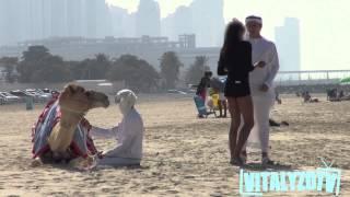 فيديو شاب يغري الفتيات بجمل في دبي يحصد 4 ملايين مشاهدة
