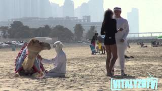 Video Gold Digger Camel Prank! MP3, 3GP, MP4, WEBM, AVI, FLV Mei 2017