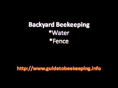 Beginning Beekeeping – 3 Things That Could Be Interesting To Learn About Beekeeping At The Beginning