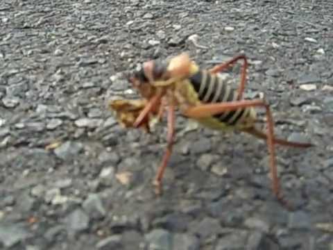 strange insect on a road