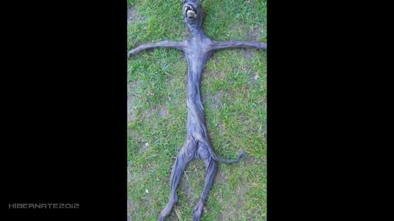 L'Alieno che fu trovato a Plettenberg Bay, in Sudafrica