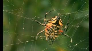 Spider Silk - Properties and Human Use