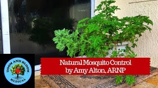 How to control and prevent mosquitoes using natural insect repellent plants around your home and garden. Citronella is a popular choice, but their are many others, like rosemary and basil. Hosted by Amy Alton, ARNP of https://www.doomandbloom.net/https://store.doomandbloom.net/https://www.facebook.com/groups/survivalmedicinedrbonesandnurseamy/https://twitter.com/preppershow