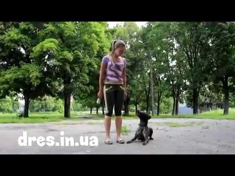 Часть 1 что делать если пес прыгает на вас? как отучить прыгать на людей?