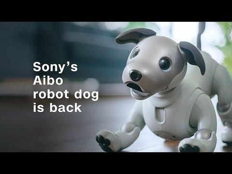 הי סירי, רוצה להוציא את הכלב? סוני Aibo עושה קאמבק