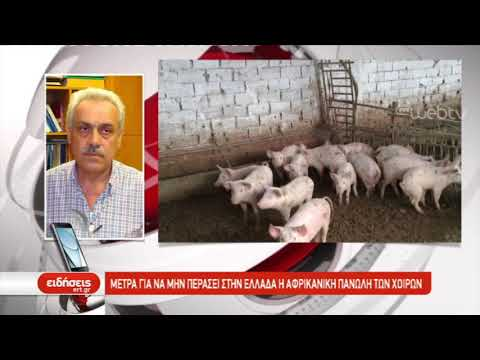 Μέτρα για να μην περάσει στην Ελλάδα η αφρικανική πανώλη των χοίρων | 26/9/2019 | ΕΡΤ