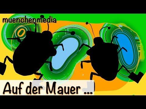 Kinderlieder deutsch / Kinderparty - Auf der Mauer auf der Lauer sitzt ne kleine Wanze