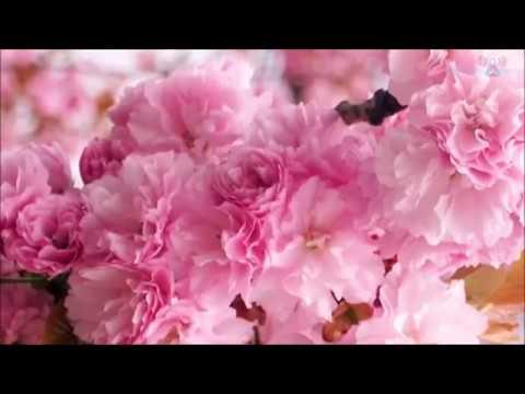 Tarjetas de amor - 08/05/2018 - MENSAJE PARA LA APARICIÓN DE MARÍA
