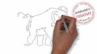 Как нарисовать картинку поэтапно карандашом за короткий промежуток времени. Видео рассказывает о том, как нарисованные картинки помогают начинающему художник...