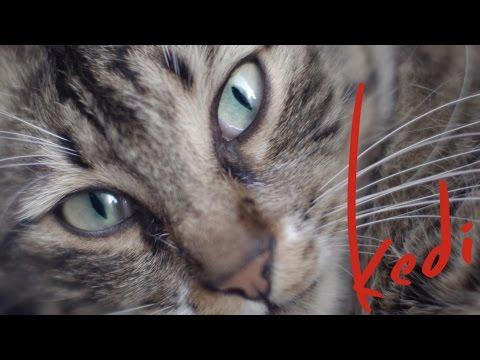 Kedi – Au royaume des chats