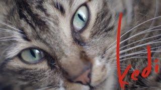 Nonton Kedi   Official U S  Trailer   Oscilloscope Laboratories Film Subtitle Indonesia Streaming Movie Download