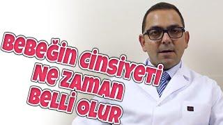 Op.Dr. Filip Taşhan - Bebeğin Cinsiyeti Ne Zaman Belli Olur