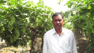 Solapur Dhanaji appasaheb babar