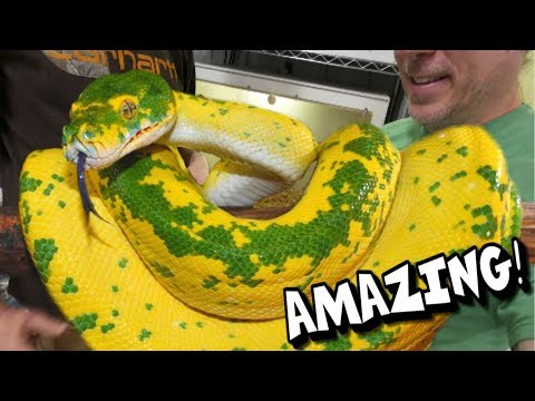 YOU HAVE TO SEE THESE SNAKES!!! AMAZING!!! | BRIAN BARCZYK