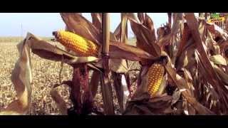Video Kukurydza DKC 3203_żniwa MP3, 3GP, MP4, WEBM, AVI, FLV November 2017