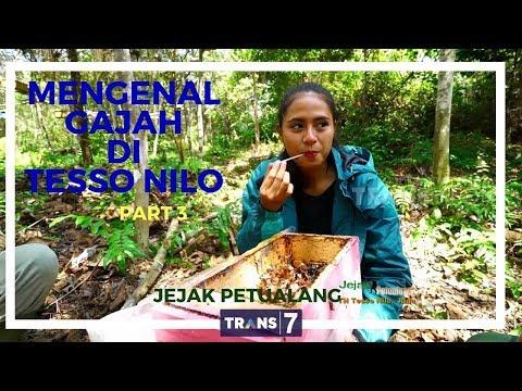 JEJAK PETUALANG | MENGENAL GAJAH DI TN TESSO NILO 3-3