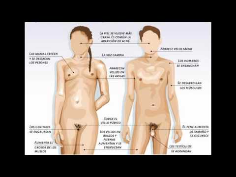 El peeling profundo de la persona del acné