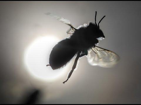 Großes Insektensterben in Deutschland in den letzte ...