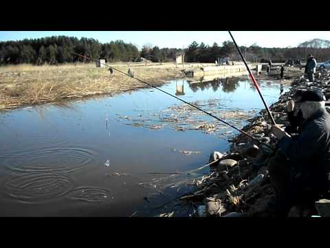 лов плотвы в проводку видео