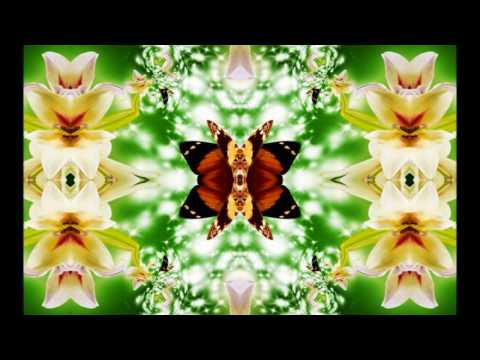 Lilies of the Field Abstract Kaleid Art HD