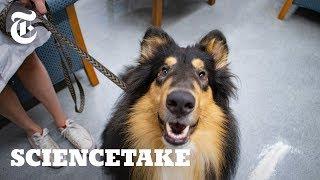 飼い主が窮地に陥っているとき、飼い犬は助けてくれるのだろうか?真剣に行われた科学実験(米研究)