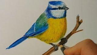 Видео: рисуем синицу цветными карандашами