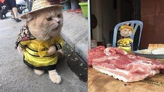 Video Viral Kucing yang Bergaya Bak Penjual di Pasar Tradisional MP3, 3GP, MP4, WEBM, AVI, FLV April 2018