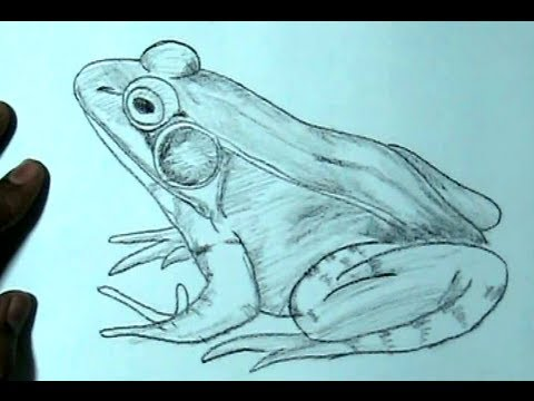 How to Draw frog in side View | YZArts | YZArts