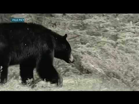 Bear attack at Suncor site kills 1 worker