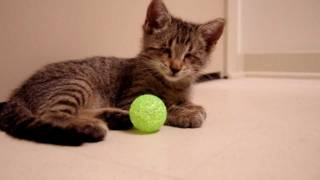 The Blind Kitten And His First Toys