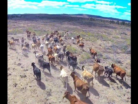 Theresa Creek Drone Video