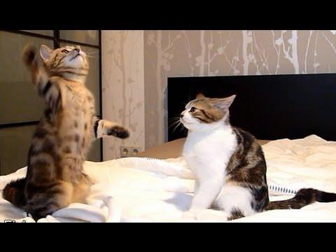 ミーアキャット ポーズ | 猫 ...