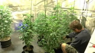 Determining Plant Sex by John Berfelo