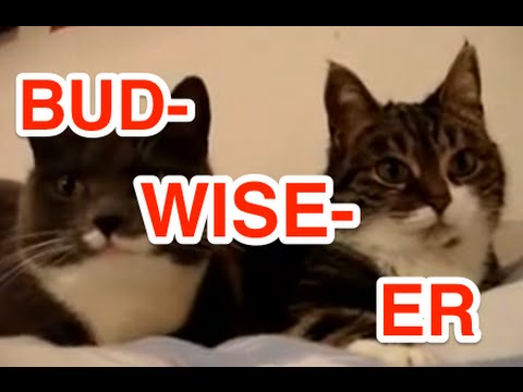 Two Talking Cats: Translation (budwiser frogs)