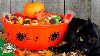 Grab Your Candy Bowl. It's Live Stream Time - Aquarium Co-Op by Aquarium Co-Op