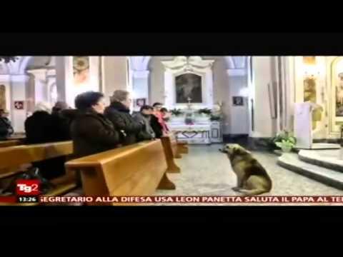 muore la padrona, il cane torna in chiesa ogni giorno al rintocco
