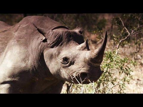 Ν. Αφρική: Δικαστήριο «μπλόκαρε» την απαγόρευση εμπορίας κεράτων ρινόκερου