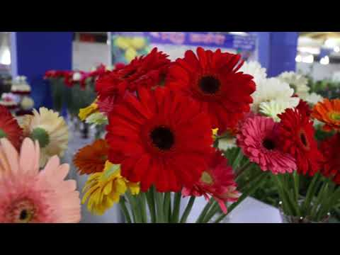 3rd International Flora Expo 2017