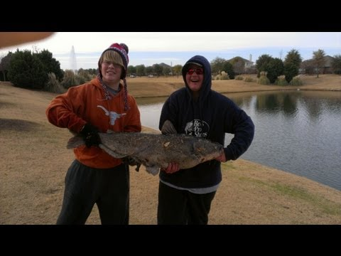 40lb Catfish caught in pond!