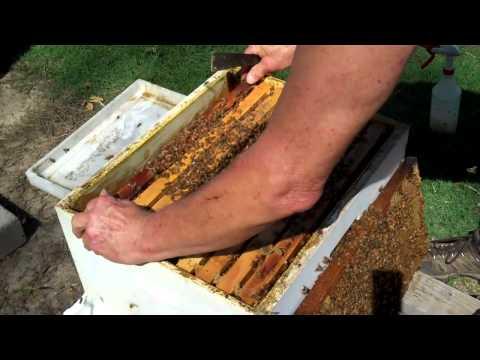 Honeybee Colony, ReQueening. Part 3. DurhamsBee Farm.com