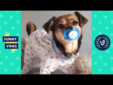 Funny Animals Vines V2 March 2018 Compilation | Cute Pets, Dogs, Birds, Cats Videos Monthly Montage