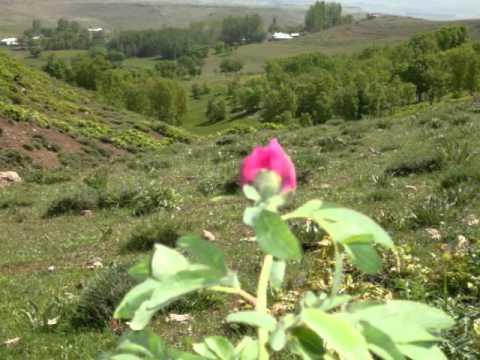 Hınıs/Mezra köyü